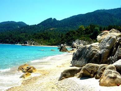 CALDICIDA SITHONIA EST: Fava Beach