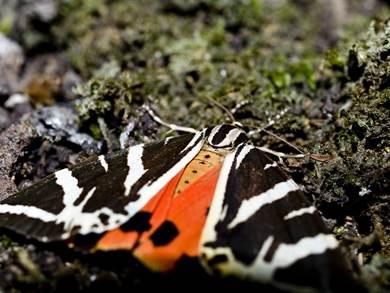 Valle delle Farfalle